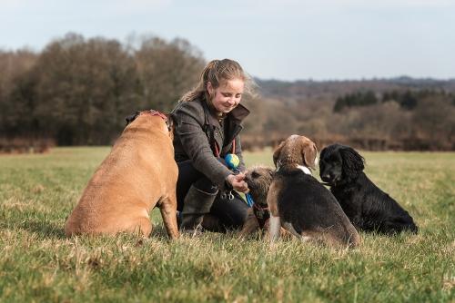 Group Dog Walks Crowborough