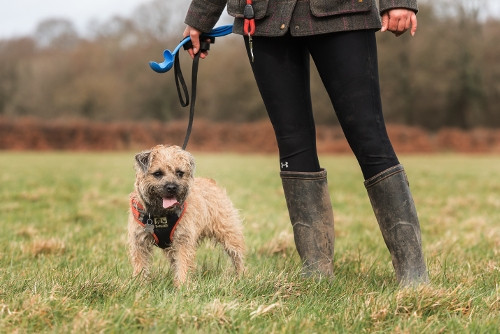Solo Dog Walks Crowborough
